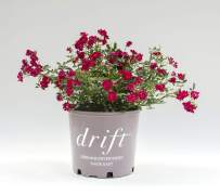Drift Red Rose in 2 Gallon pot (Red)