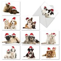 10 Assorted 'Christmas Copycats' Christmas Cards with Envelopes 4 x 5.12 inch, Stationery with Photos of Matching Dog and Cat Pairs, Season's Greetings Cards for Kids and Adults M6596XSG