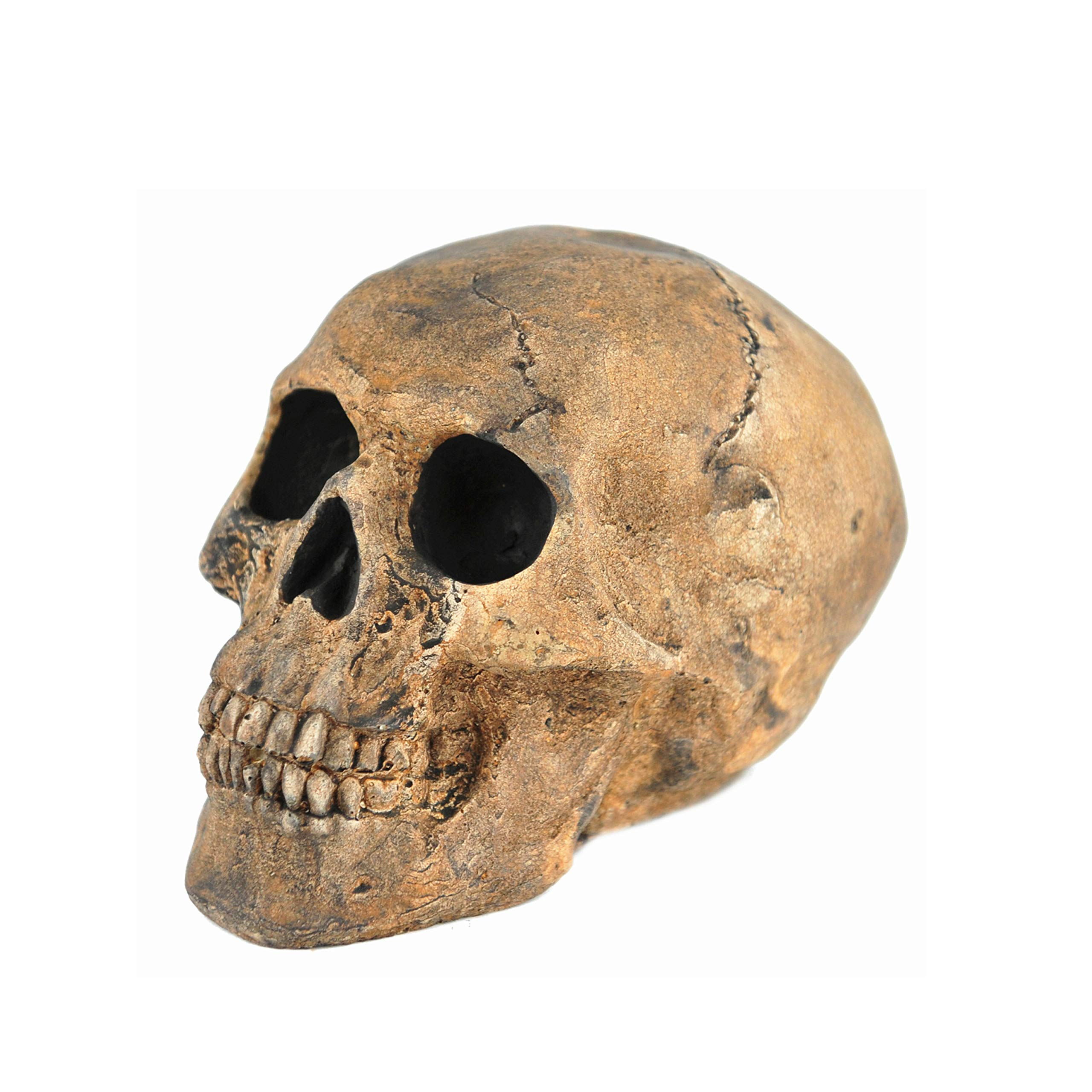 Myard Fireproof Imitated Human Fire Pit Skull Gas Log for NG, LP Wood Fireplace, Firepit, Campfire, Halloween Decor, BBQ (Qty 1, Brown - Mini, One Piece)