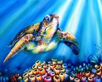 Paint Pizzazz Paint by Numbers for Adults – Beautiful Special Edition Box Set, Artist Endorsed, Rolled Wrinkle-Free Canvas, 16x20 inch – Turtle Reef