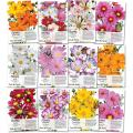 Seed Needs Cosmos Wildflower Seed Packet Collection (12 Individual Packets) Open Pollinated Seeds