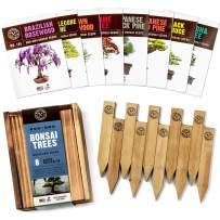 Bonsai Tree Seeds Kit - 8 Popular Varieties of Non GMO Mini Bonsai Trees, Bamboo Plant Markers, Wood Gift Box - Bonzie Tree Seed Starter Kits, Grow Bonzai Indoor Garden, Gardening Gifts Idea