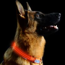 """Pet Industries Metal Buckle LED Dog Collar, USB Rechargeable, Available in 7 Colors & 4 Sizes (Large [18.5-23.5"""" / 47-60 cm], Aerospace Orange)"""