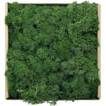 Reindeer Moss Preserved Floral Decorative Moss for Dressing Potted Plants, Fairy Garden, Terrariums and Many Other Crafts, 7 Ounce (Green)