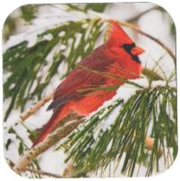 3dRose CST_112146_1 Red and Black Cardinal Perched in Snowy Pine Tree Soft Coasters, Set of 4