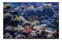 Underwater Scene with Coral Reef & Tropical Fish 9017132 (Premium 1000 Piece Jigsaw Puzzle for Adults, 20x30, Made in USA!)