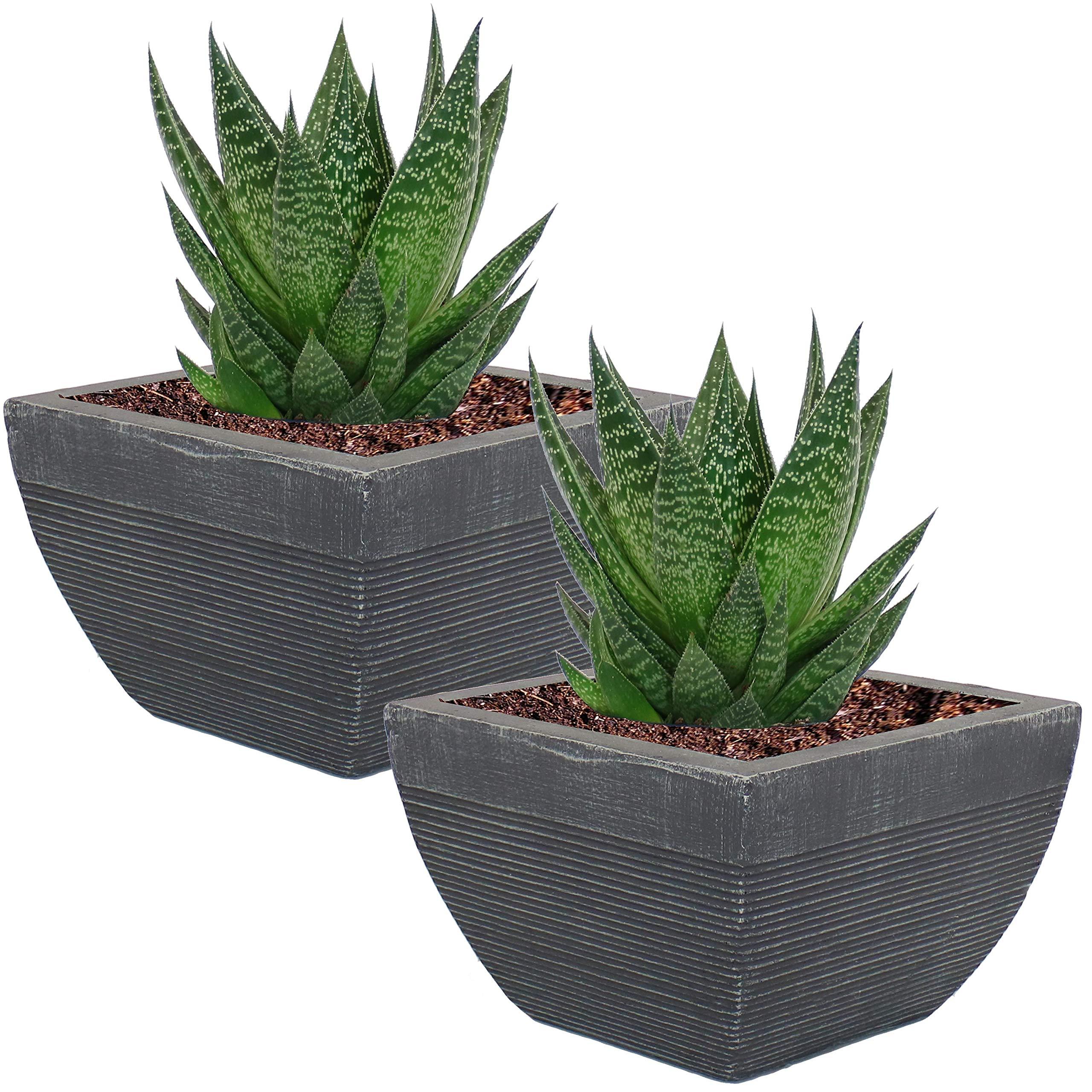 Sunnydaze Residency Fiber Clay Modern Planter Flower Pot, Durable Indoor/Outdoor 8-Inch Set of 2