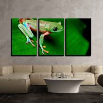 """wall26 - 3 Piece Canvas Wall Art - Tropical Frog on Leaf in Rain Forest of Costa Rica - Modern Home Art Stretched and Framed Ready to Hang - 24""""x36""""x3 Panels"""