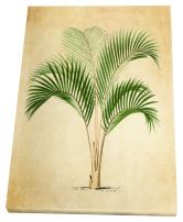 WEXFORD HOME Vintage Palmary (Palm Tree) Sktech III Gallery Wrapped Canvas Wall Art, 16x20