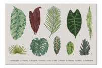Vintage Botanical Illustration Set of Exotic Leaves 9014446 (19x27 Premium 1000 Piece Jigsaw Puzzle, Made in USA!)