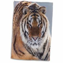 "3D Rose China-Harbin Park Siberian Tiger Hand Towel, 15"" x 22"""