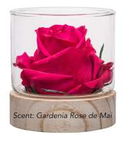 Sustainable Home Scent 12oz A Real Fragrance Flower with Lasting abilities Similar to Scented Candle, Wax and Aroma Diffuser (Fuchsia/Fragrance Gardenia Rose de Mai)