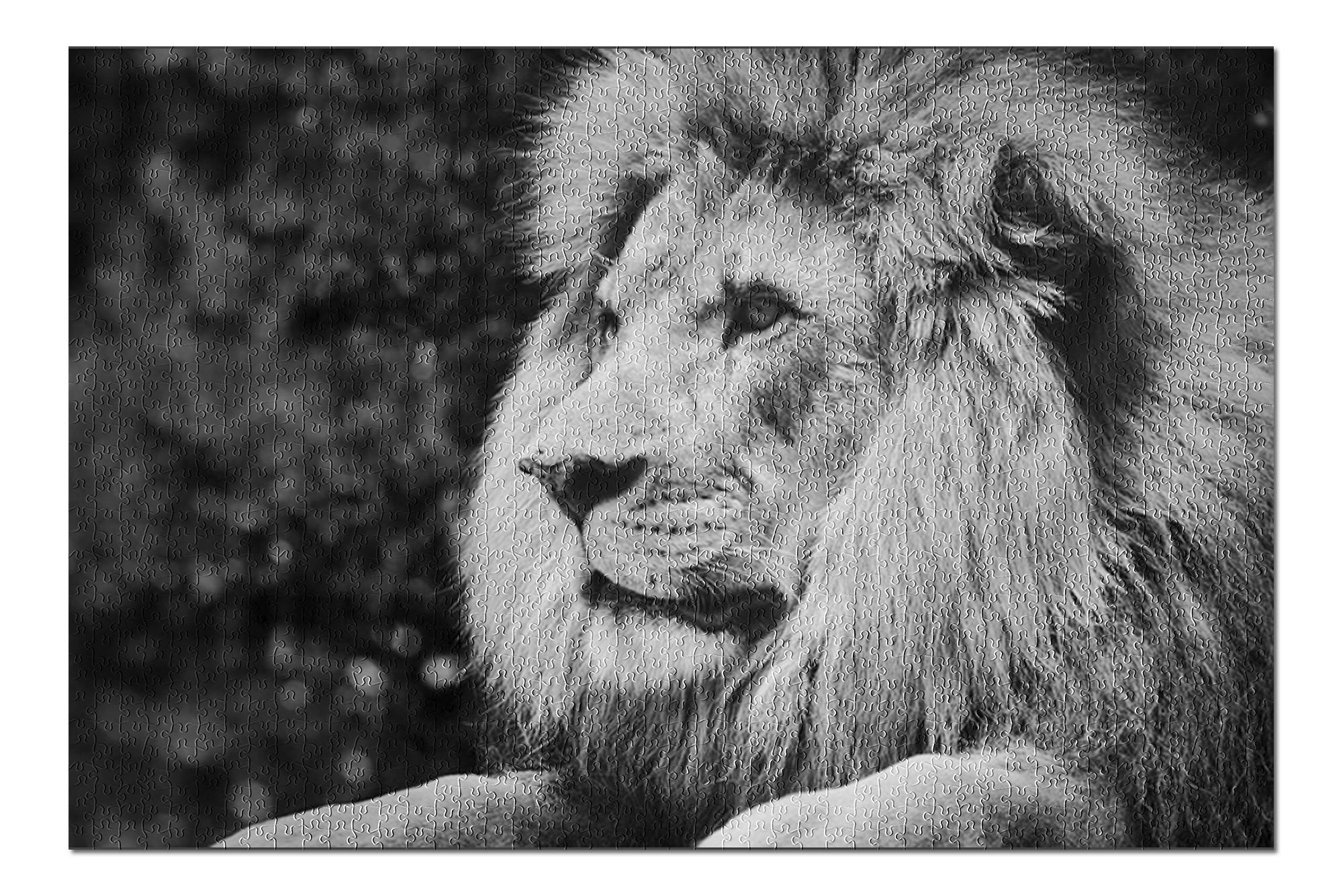 Male Lion in Profile Black and White Photograph A-90772 (Premium 1000 Piece Jigsaw Puzzle for Adults, 19x27, Made in USA!)