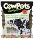CowPots CP4-12 4-Inch Square, 12 Pack, Brown