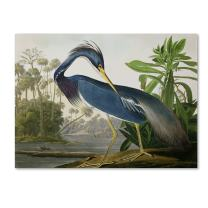 Louisiana Heron Artwork by John James Audubon, 26 by 32-Inch Canvas Wall Art