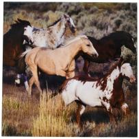 3dRose ct_93557_4 USA, Oregon, Seneca, Ponderosa Ranch. Horses-US38 BJA0382-Jaynes Gallery-Ceramic Tile, 12-Inch