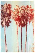 """Vintage-Look Turquoise and Sepia Palm Tree Print, 10""""x15"""""""