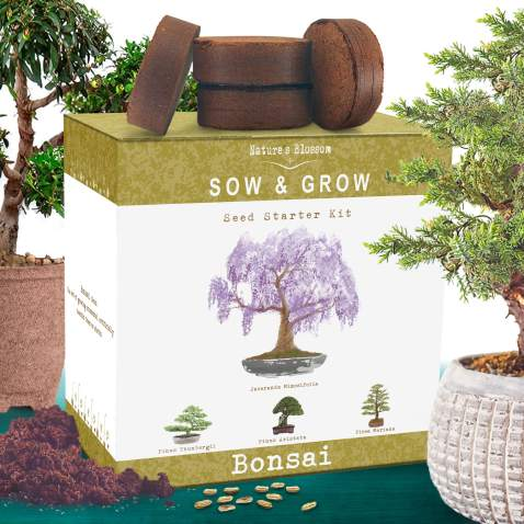 Nature S Blossom Bonsai Tree Kit Grow 4 Types Of Bonsai Trees From Seed Indoor Outdoor Gardening Starter Set With Tree Seeds Soil Pots Labels Growing Guide