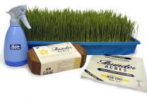 Complete Wheatgrass Growing Kit, Colored Trays, Organic Soil, Fertilizer, Seed, Spray Bottle, Instructions. (Blue)