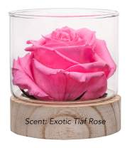Sustainable Home Scent 12oz. A Real Fragrance Flower with Lasting abilities Similar to Scented Candle, Wax and Aroma Diffuser (Magenta Pink/Fragrance Tiaf Rose)