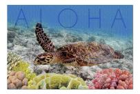 Sea Turtle and Coral - Aloha (Premium 1000 Piece Jigsaw Puzzle for Adults, 20x30, Made in USA!)