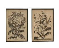 Creative Co-op Floral Image Metal Framed (Set of 2 Styles) Wall Décor, Black