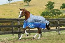 Weatherbeeta Comfitec Premier Free Standard Neck Medium Turnout Blanket