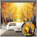 Wall Mural – Golden Autumn – Decoration Birch Forest Nature Landscape Tree Avenue Path Autumn Sun Seasons Park Forest Wallpaper Photoposter Decor (132.3 x 93.7 Inch / 336 x 238 cm)
