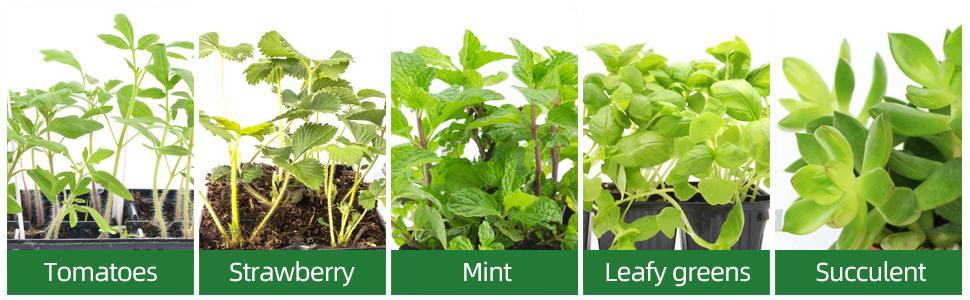 Various Plant Type