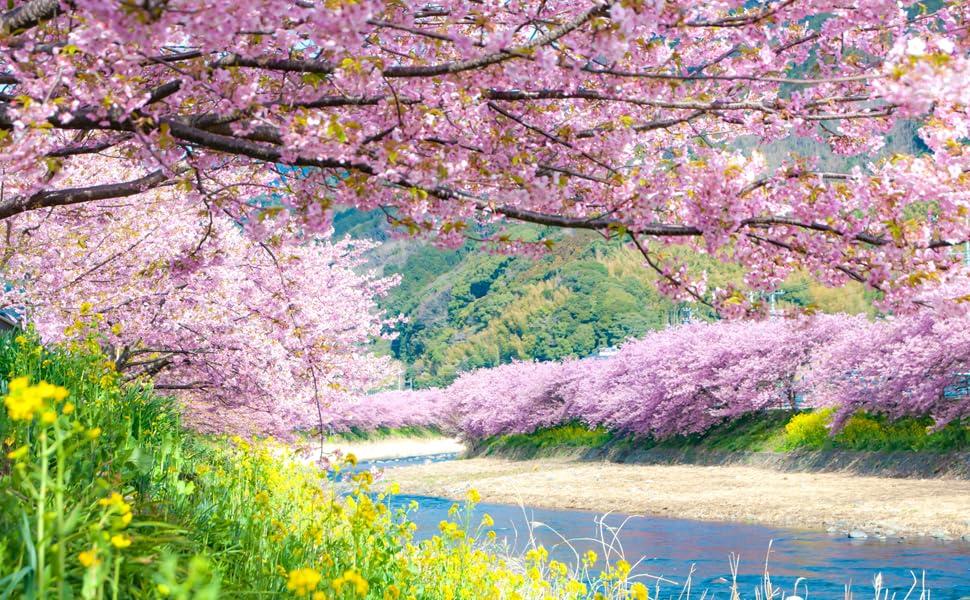 sakura japanese