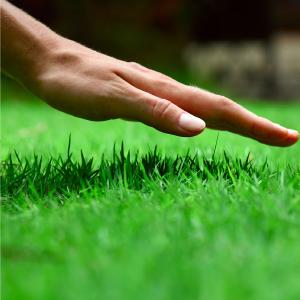 faux grass