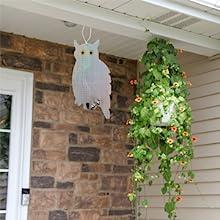 owl bird deterrent home