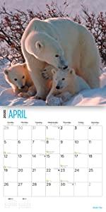 2020 polar bear calendar