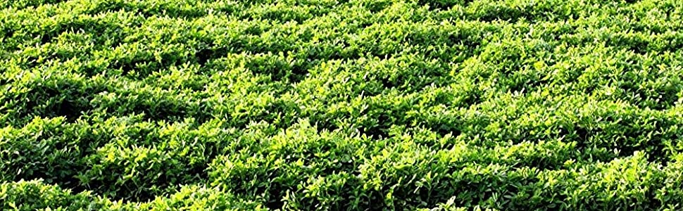 alfalfa vernal covercrop outsidepride seed hay production livestock feed