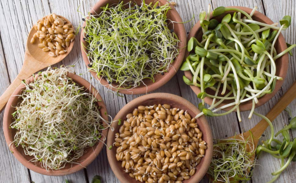 Organic sprout seeds