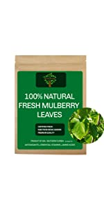 Fresh Mulberry Leaves, Fresh Mulberry Tea
