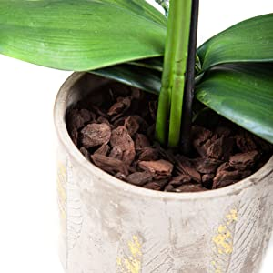 large orchid in a pot