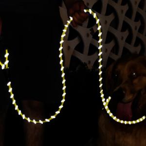 Reflective dog leash green
