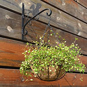 ponds gardens houseplant out patio rocks periwinkle rack greens fertilizer super with blue short