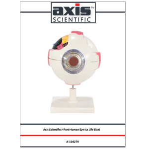 Axis Scientific 7-Part Human Eye (5x Life Size)