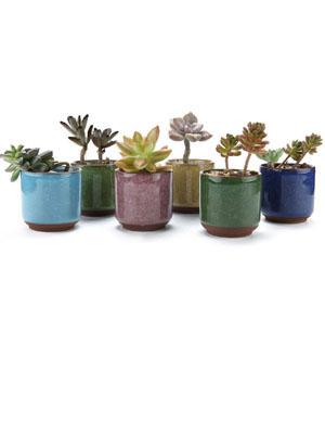 mini succulent pots ice crack