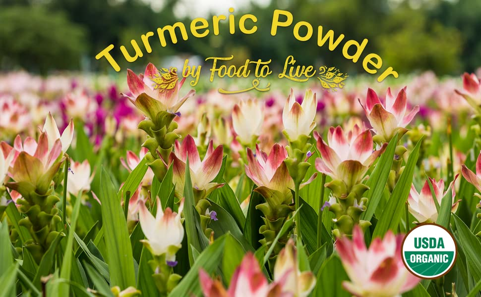 turmeric powder, food to live