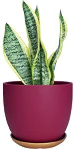 """5.5"""" Plant Pots"""