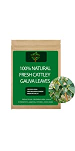 Fresh Cattley Guava Leaves