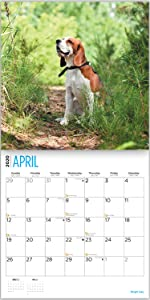 Beagle calendar