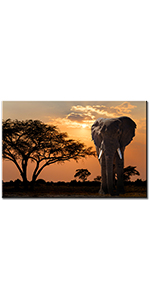 sunset african steppe sky contemporary decorations office wall printed modern ready to hang
