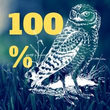 HIGH EFFECTIVITY FAKE OWL DECOY