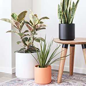Modern Ceramic Planters