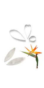 Strelitzia veiners & cutters