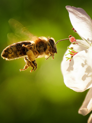 Give back to the bees